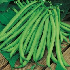 A white seeded variety justly popular for the flavour of its heavy crops of round stringless pods. Dried beans can be used as haricots. A Best Buy variety as recommended by the Gardening Press and Consumer Groups