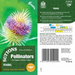 Seeds For Pollinators - Teasel Seeds by Suttons Seeds  142025  Nationwide Delivery On Flower Seeds