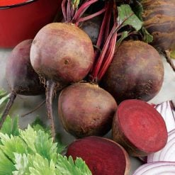 Beetroot Boltardy by Suttons Seeds  151383  Nationwide Delivery