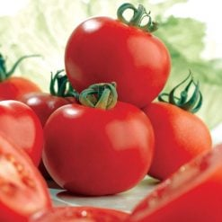 Tomato Ailsa Craig by Suttons Seeds  180850  Nationwide Delivery